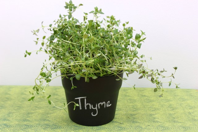 DIY Thyme Chalk Paint Pot